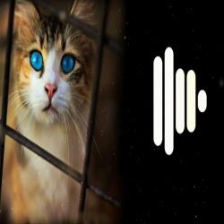 Gyurza Cat Version Ringtone